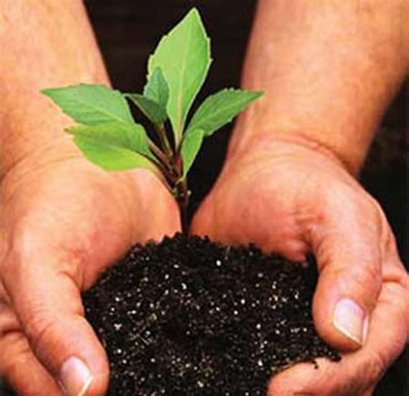 PlantingTrees